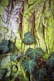 Close up da casca verde com folhas Imagens de Stock Royalty Free