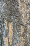Close up da colônia da térmita em uma casca de uma árvore fotografia de stock