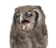 Close-up da Eagle-coruja de um Verreaux - lacteus do bubão 3 anos velho fotos de stock