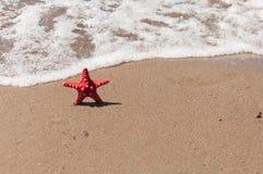 Close up da estrela do mar na praia Fotografia de Stock Royalty Free