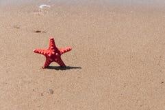 Close up da estrela do mar na praia Imagens de Stock Royalty Free