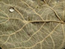 Close-up da estrutura de uma folha com uma gota da água foto de stock royalty free