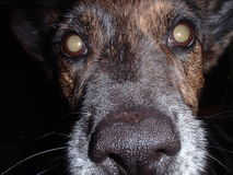 Close-up da face do cão imagem de stock