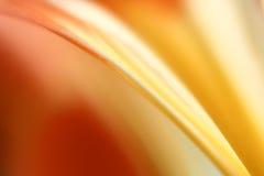 Close up da flor fotos de stock