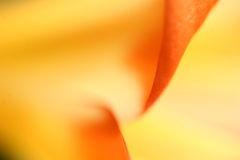 Close up da flor imagens de stock royalty free