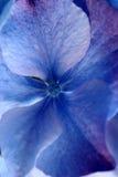 Close up da flor Imagem de Stock