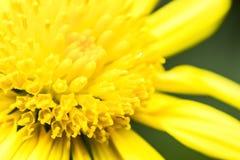 Close-up da flor Foto de Stock