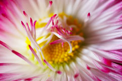Close-up da flor Imagem de Stock Royalty Free