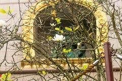 Close up da flor branca em Chung Tai Chan Monastery em Formosa foto de stock royalty free