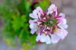 Close up da flor branca em um dia ensolarado imagem de stock royalty free