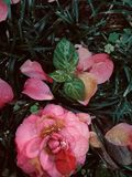 Close-up da flor caída na terra fotos de stock royalty free