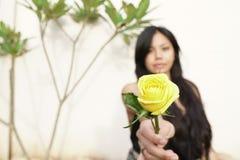 Close-up da flor cor-de-rosa amarela na mão da menina fotografia de stock royalty free
