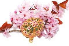 Close up da flor de cereja fotografia de stock royalty free