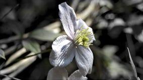 Close up da flor violeta Fotografia de Stock