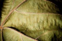 Close up da folha Imagem de Stock