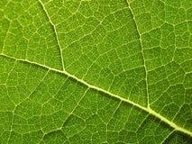 Close-up da folha da planta Imagens de Stock Royalty Free