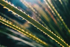 Close-up da folha de uma planta com borda serrilhada fotos de stock