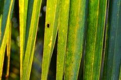 Close up da folha do coco na luz disponível Imagens de Stock
