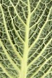 Close up da folha do repolho Fotos de Stock