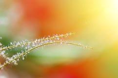 Close-up da folha molhada Fotos de Stock