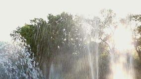 Close-up da fonte de água contra uma árvore verde em um parque da cidade vídeos de arquivo