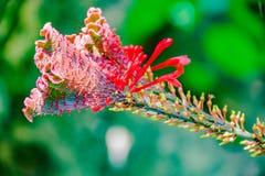Close-up da fotografia da flor fotografia de stock royalty free