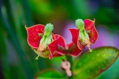Close-up da fotografia da flor imagens de stock royalty free