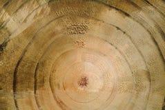 Close-up da grão de madeira a Fotografia de Stock