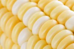Close up da grão do milho Imagens de Stock Royalty Free