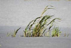 Close up da grama da costa que funde no vento fotos de stock
