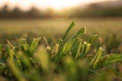 Close up da grama segada Imagem de Stock