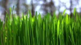 Close up da grama verde da mola filme