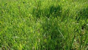 Close up da grama verde fotografia de stock royalty free