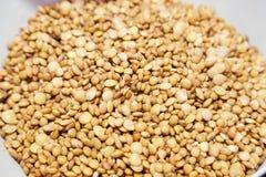 Close up da lentilha macia embebida Imagem de Stock