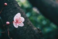 Close-up da luz pequena - flores cor-de-rosa fotografia de stock royalty free
