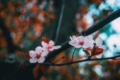 Close-up da luz pequena - flores cor-de-rosa fotos de stock
