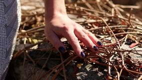 Close-up da mão de uma menina nos ramos secos de uvas selvagens no parque do outono filme