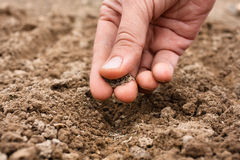 Close up da mão que planta sementes no solo Fotografia de Stock Royalty Free