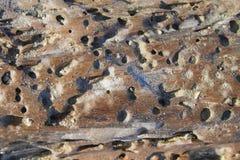 Close up da madeira lançada à costa da praia Imagens de Stock Royalty Free
