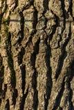 Close-up da madeira velha, do quadro completo e do backfround fotos de stock royalty free