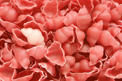 Close-up da massa italiana - seashells coloridos Imagens de Stock Royalty Free