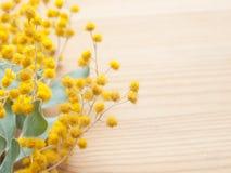 Close up da mimosa no fundo de madeira fotografia de stock