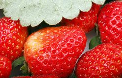 Close-up da morango Imagens de Stock