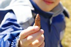 Close up da natureza de exploração do menino que guarda o pinecone pequeno em seu ha Fotografia de Stock Royalty Free