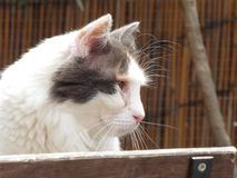Close-up da opinião lateral do gato Foto de Stock Royalty Free