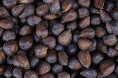 Close up da palma espinhosa fotografia de stock