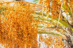 Close up da palmeira Fotografia de Stock Royalty Free