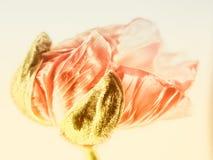 Close-up 140 da papoila Imagens de Stock Royalty Free