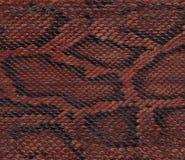 Close up da pele de serpente Foto de Stock