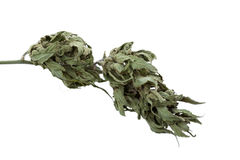Marijuana Foto de Stock Royalty Free